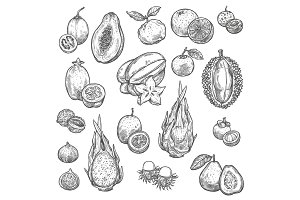 Exotic tropical fruits sketches