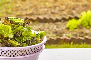 Fresh leaf salad in a bowl