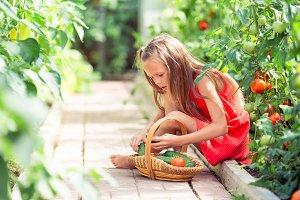 Cute little girl collects crop cucum