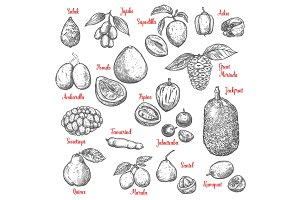 Exotic tropical fruits vector sketch