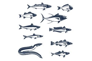 Sea and ocean fishes vector icons