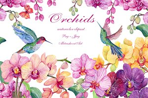 Orchids and hummingbirds.Watercolor