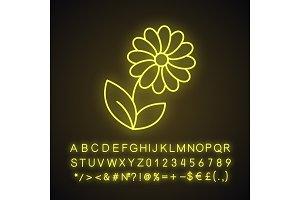 Camomile neon light icon