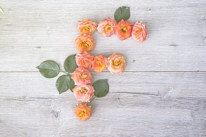 F, roses flower alphabet isolated on