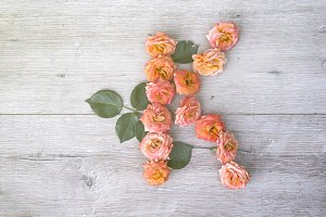 K, roses flower alphabet isolated on