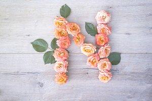 N, roses flower alphabet isolated on