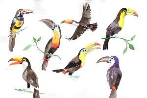 Tropical bird toucan PNG watercolor