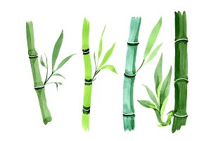 Bamboo tropic plant PNG watercolor