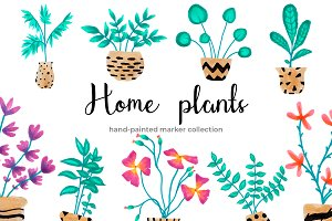 Home Plants in Pots
