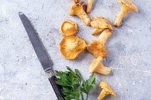 Chanterelle Mushrooms on a Stone Boa