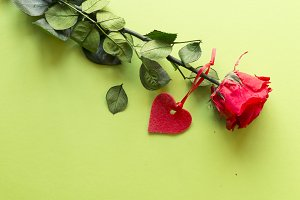 One red rose with a heart on a green