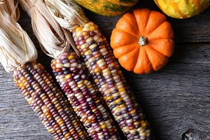 Flint Corn, Gourds, and squash on a