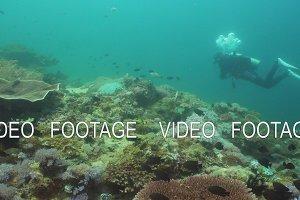Scuba Diver underwater. Philippines