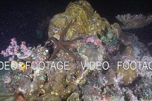 Starfish on coral. Philippines