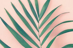 Palm leaves over pink background