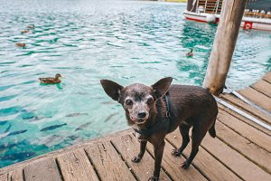 Dog standing on the dock