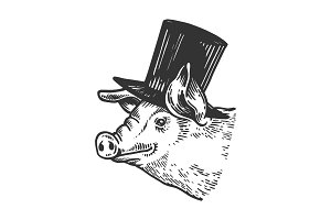 Pig animal in cylinder top hat