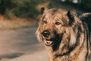 good dog outdoors
