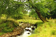 Forest Stream Trees England