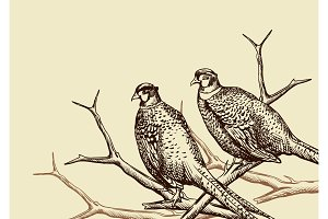 Background with pheasants.