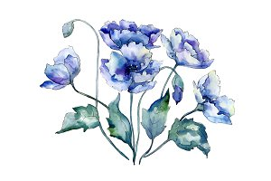 Bouquet of blue poppies PNG set