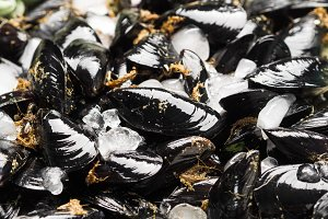 Fresh raw mussels on rusty tray