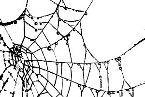 Spider Web Graphic Silhouette