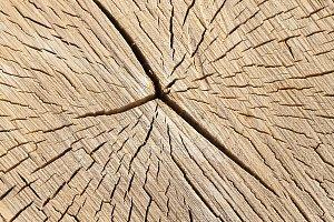 old cracked birch