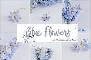 Blue Flowers Bundle
