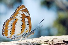 Butterfly Wings Trying To Fly by  in Animals
