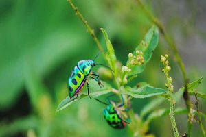 Bug Green Colorful Insect