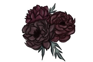 Illustrated Dark Purple Peonies