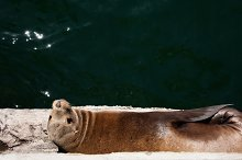 Basking in the Sun by  in Animals