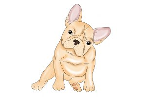 Cute French Bulldog Illustration