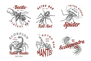 Set of insects logos. Vintage