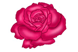 Illustrated Bright Pink Rose