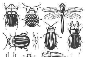 Vintage Insects Collection