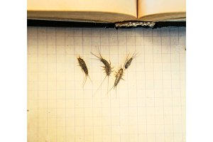 Pest books and newspapers. Insect