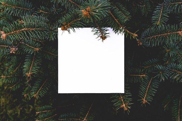 flat layout of dark moody pine tree…