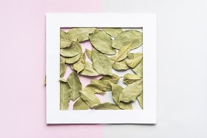 dried green tea leaves on soft color