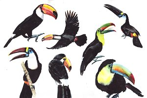 Tropical toucan PNG watercolor bird