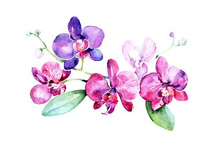 Branch of purple orchids PNG set