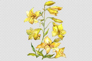 Bouquet of yellow lilies PNG set