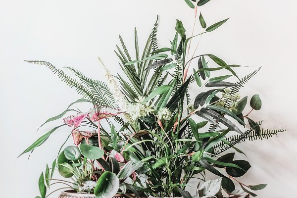 Stock Photos: VICUSCHKA - Modern still life with house plants