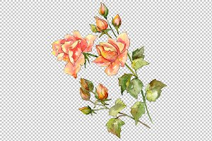 Bouquet of wonderful roses PNG set