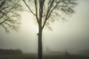 A winter's day in the fog
