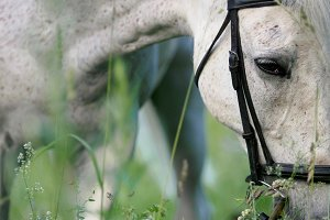 Horse portrait. Sad eyes of a