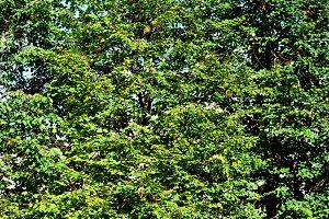 Green leaves landscape texture backg