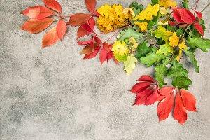 Oak maple autumn leaves background