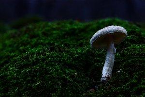 White mushroom on moss autumn forest